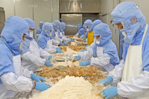workers in food processing production line in a factory in north china